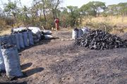 Charcoal-deforestation